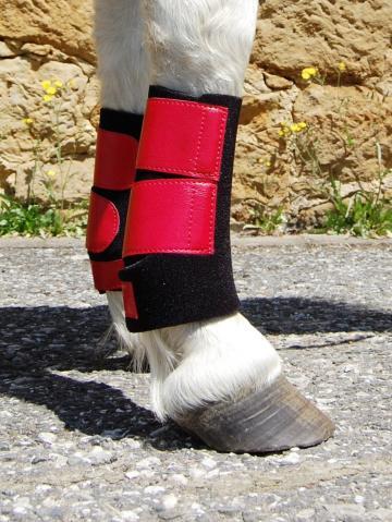 Fesselkopfgamaschen Shetty schwarz-rot